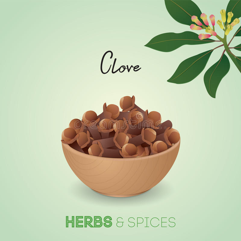 Aromatic dried clove flower buds vector illustration