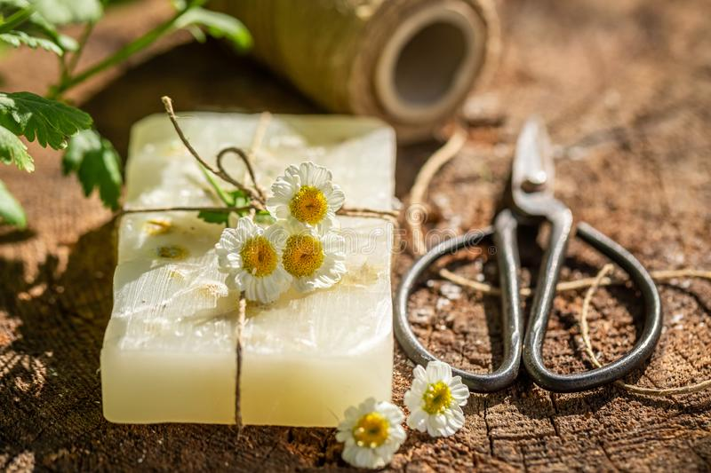 Aromatic and ecological chamomile soap made of fresh ingredients royalty free stock image