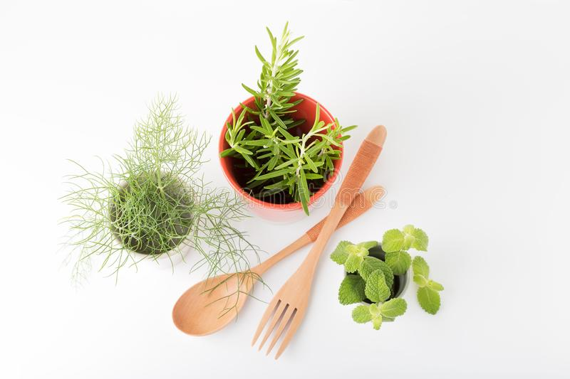 Aromatic fresh herbs royalty free stock image