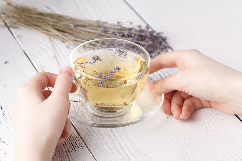 Aromatic herbal tea in glass cup holding female hands stock photos