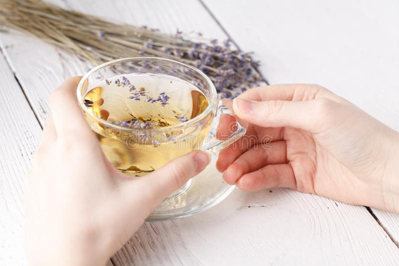 Aromatic herbal tea in glass cup holding female hands stock photography