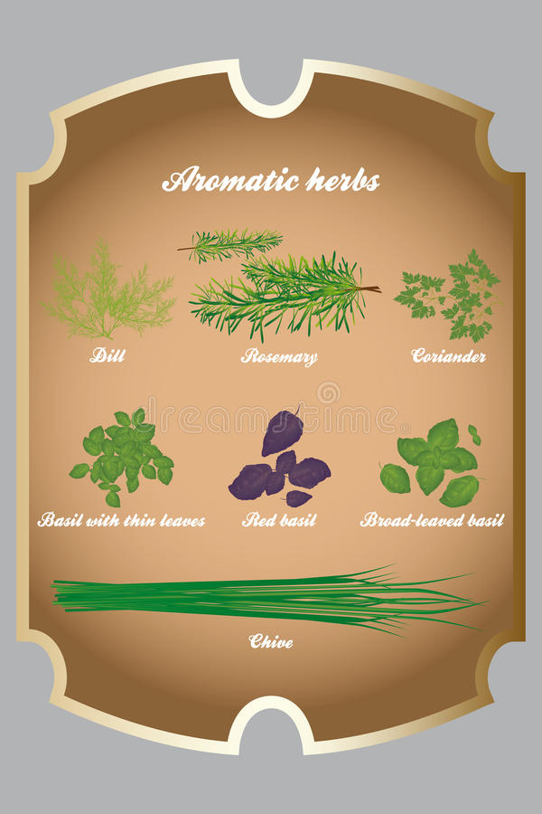 Aromatic herbs set. On brown table - vector illustration stock illustration