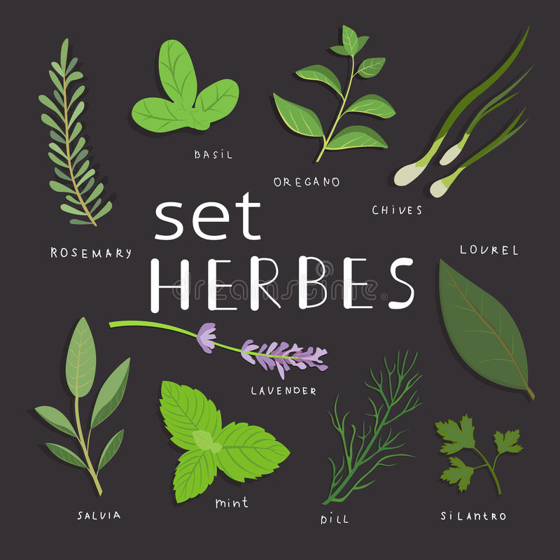 Aromatic herbs set. Fresh herbs and spices set. Vector illustration. eps 10. royalty free stock photography