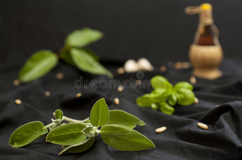 Aromatic plants and ingredients stock photos