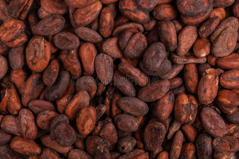 Aromatic raw cocoa beans background. Top view. Close up royalty free stock image