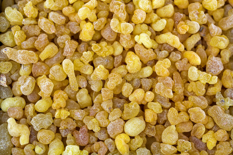 Aromatic yellow resin gum from Sudanese Frankincense tree, incense made of Boswellia sacra tree, Etiopia stock photography
