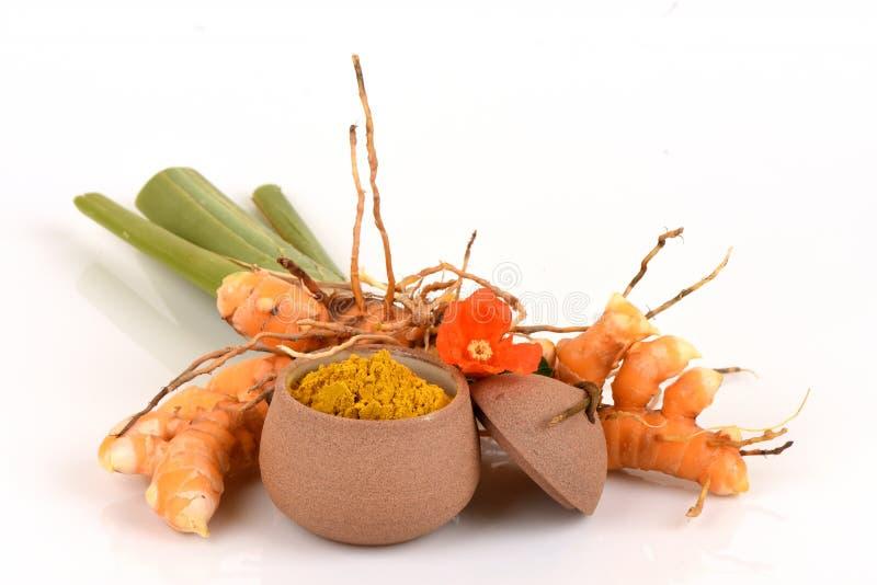 Aromatica selvagem fresco Salisb da curcuma da cúrcuma e do pó erva de Tailândia fotos de stock royalty free