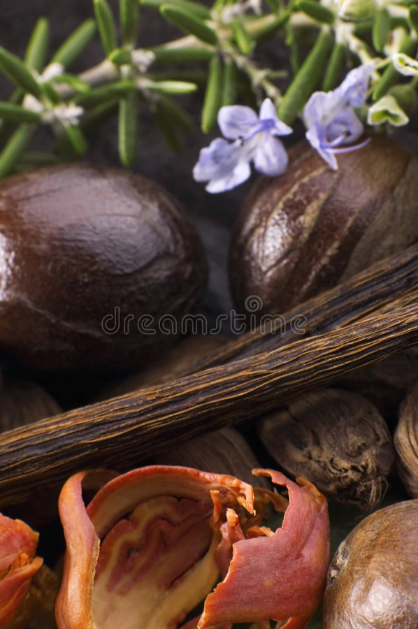 Aromatische kruiden en kruiden stock afbeelding