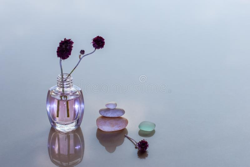 Aromatisches Öl Rose in einer Flasche mit einem festen Zweig stockfotografie