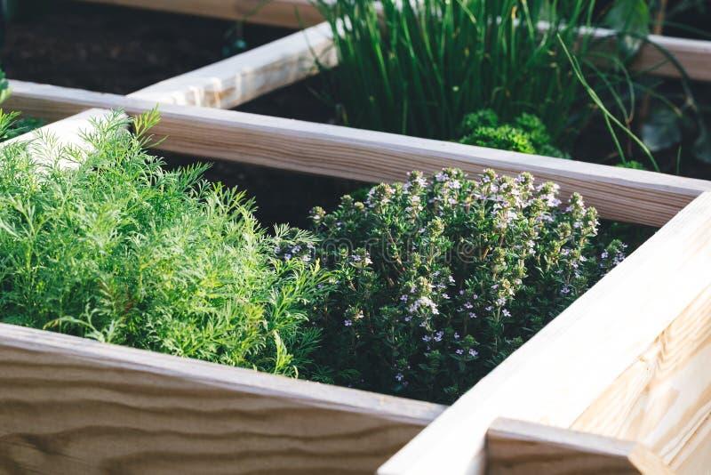 Aromatiska örter i en lyftt sängträdgård arkivbild
