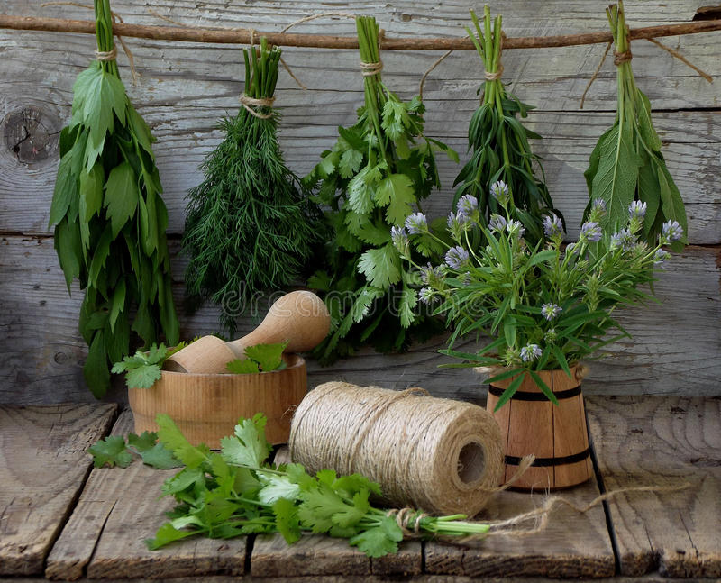 Aromatyczny ziele lubczyk, koper, cilantro, hizop, mędrzec, błękitna kozieradka, macierzanka obraz stock