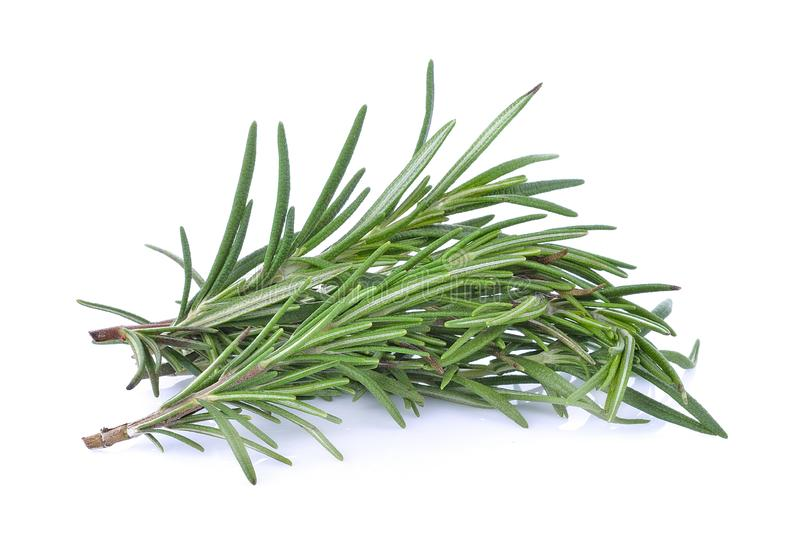 aromatycznych t?a kulinarnych ziele odosobniony rozmarynowy biel obraz stock