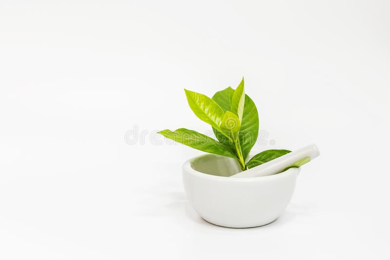 Arome sain d'herbes organiques fraîches photos stock
