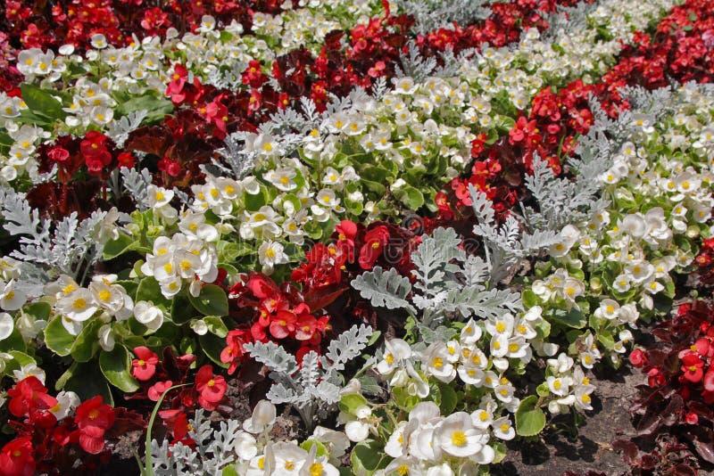 Arpet de ¡ de Ð des fleurs colorées images libres de droits