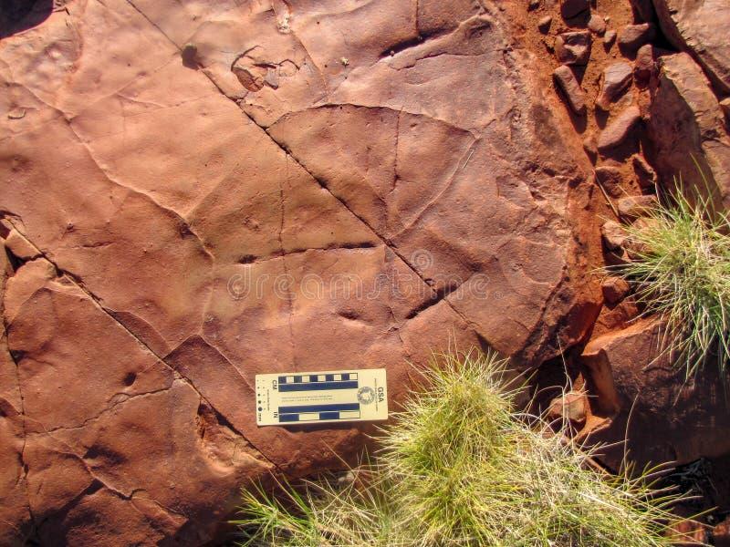 Arqueologia - a abrasão marca na tabela de trituração da rocha em Austrália foto de stock royalty free