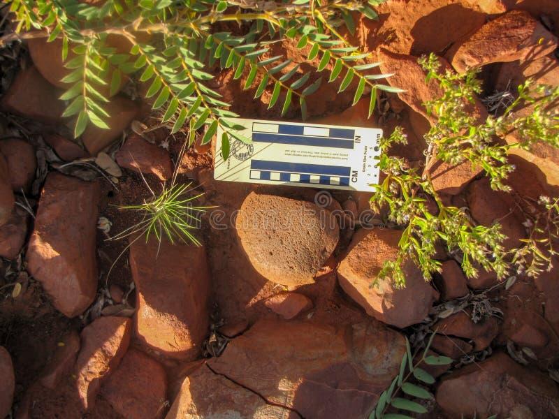 Arqueologia - pedra de moer in situ foto de stock royalty free