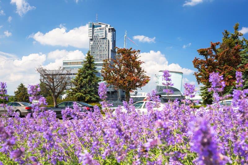 Arquitetura da cidade de Gdynia com os flovers roxos da alfazema, Polônia fotos de stock royalty free