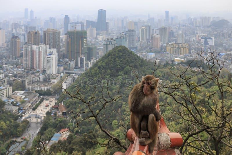 Arquitetura da cidade de Guiyang no meio-dia, província de Guizhou, China com o macaco no primeiro plano fotos de stock royalty free