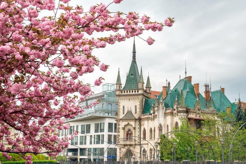Arquitetura da cidade Kosice, Eslováquia com um palácio histórico de Jakab da construção em um fundo do dia de sakura das flores  imagem de stock