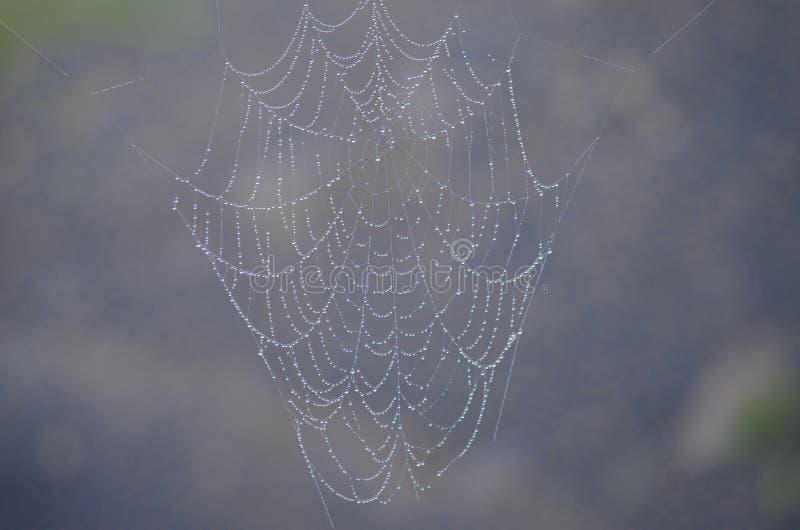 Arquitetura da Web de aranha fotos de stock