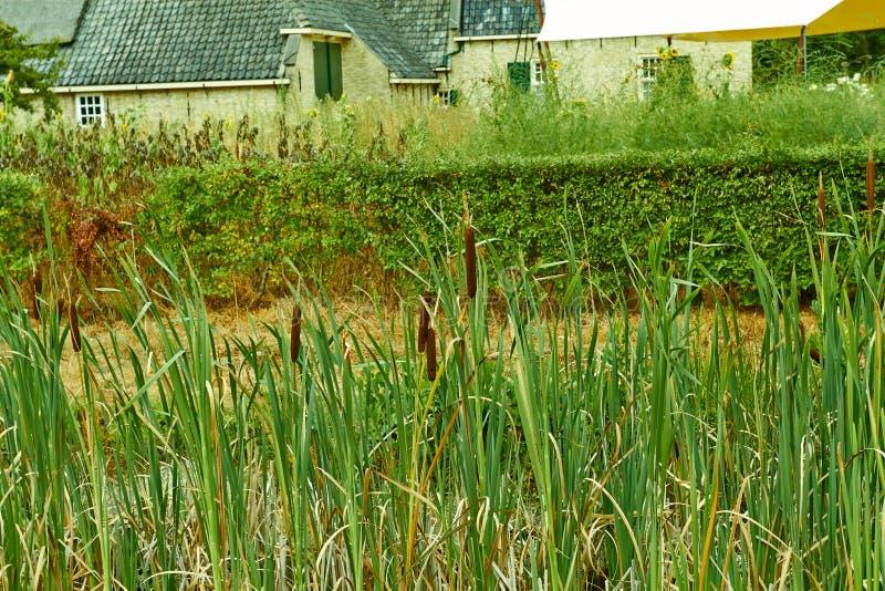 Arquitetura tradicional de Países Baixos, casas holandesas velhas e jardinagem Países Baixos julho fotos de stock