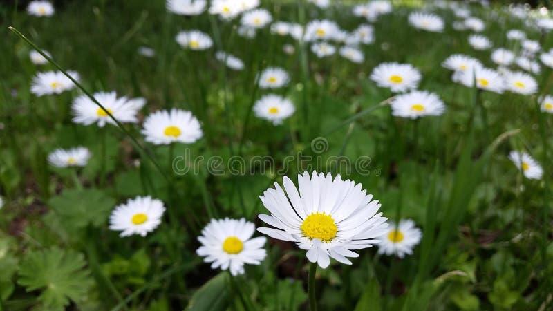 Arquivado com flores fotografia de stock royalty free