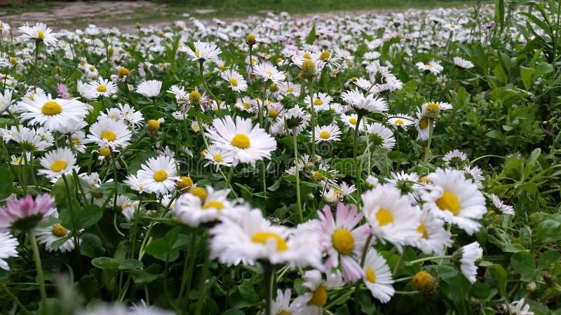 Arquivado com flores da margarida fotografia de stock royalty free