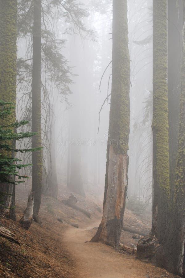 Arrástrese en el bosque con la niebla densa, Yosemite fotos de archivo libres de regalías