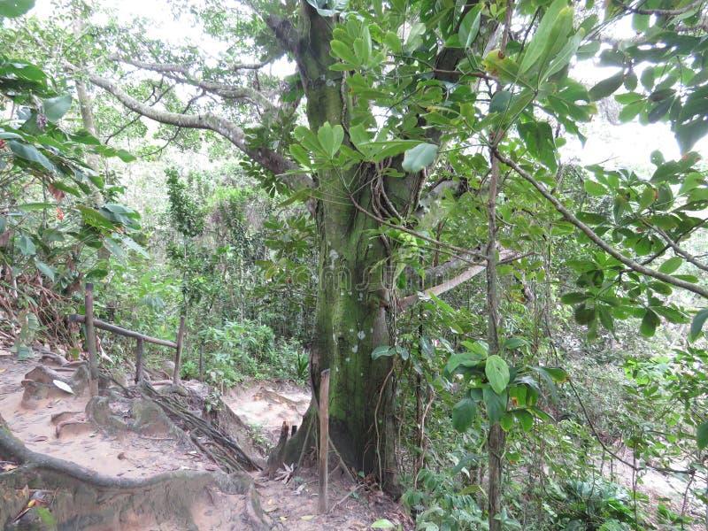 Arrástrese en el medio del bosque - Trindade - Paraty foto de archivo libre de regalías