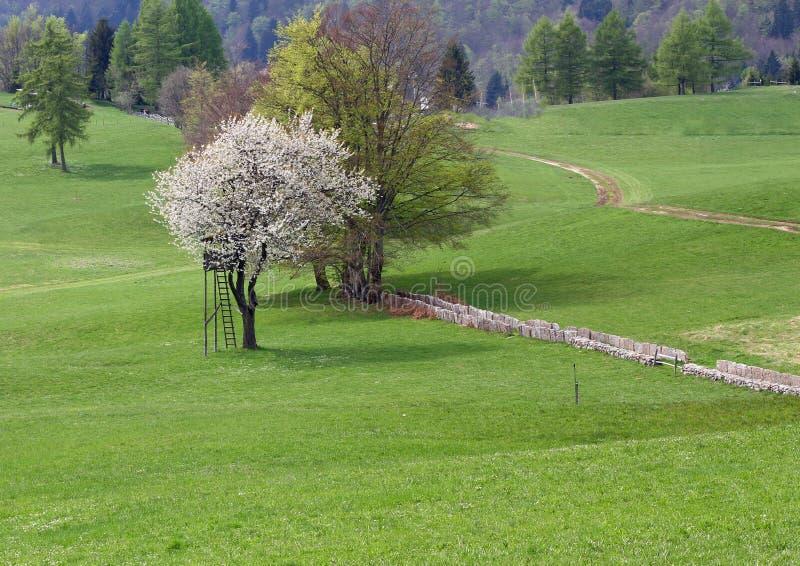 Arrástrese en el prado en las montañas en medio de prados fotos de archivo