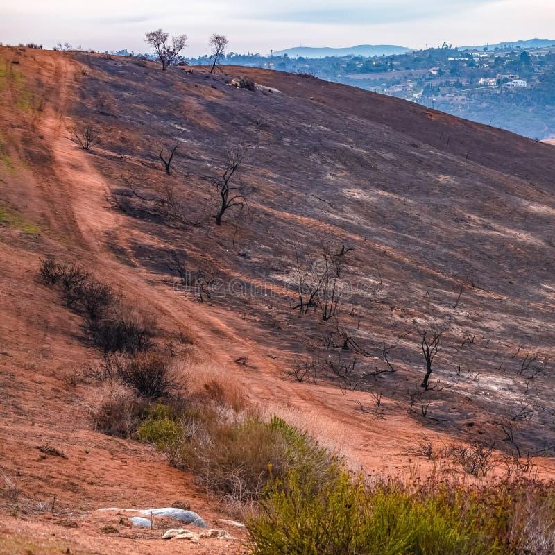 Arrástrese en una colina destruida por el fuego de la lila imágenes de archivo libres de regalías