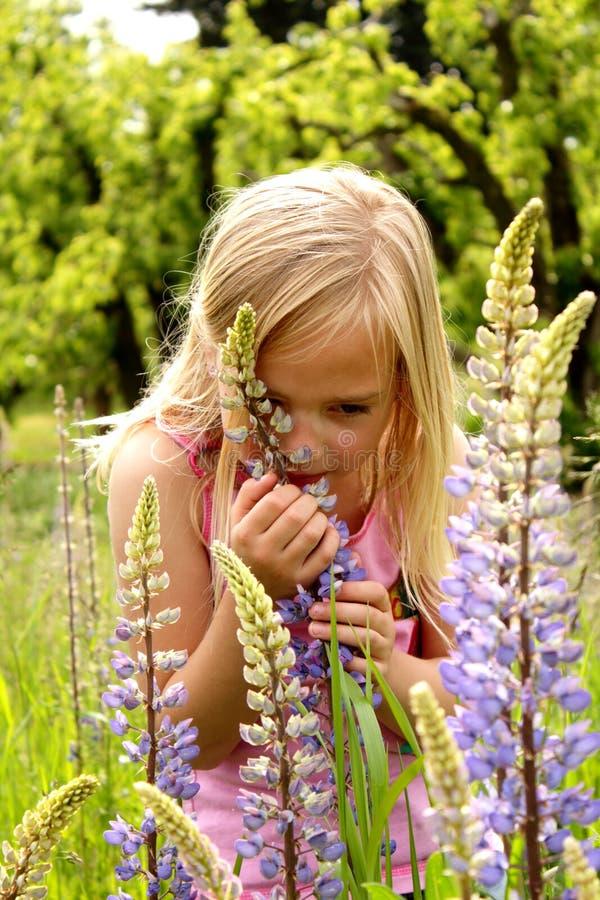 Arrêtez et sentez les fleurs photographie stock libre de droits