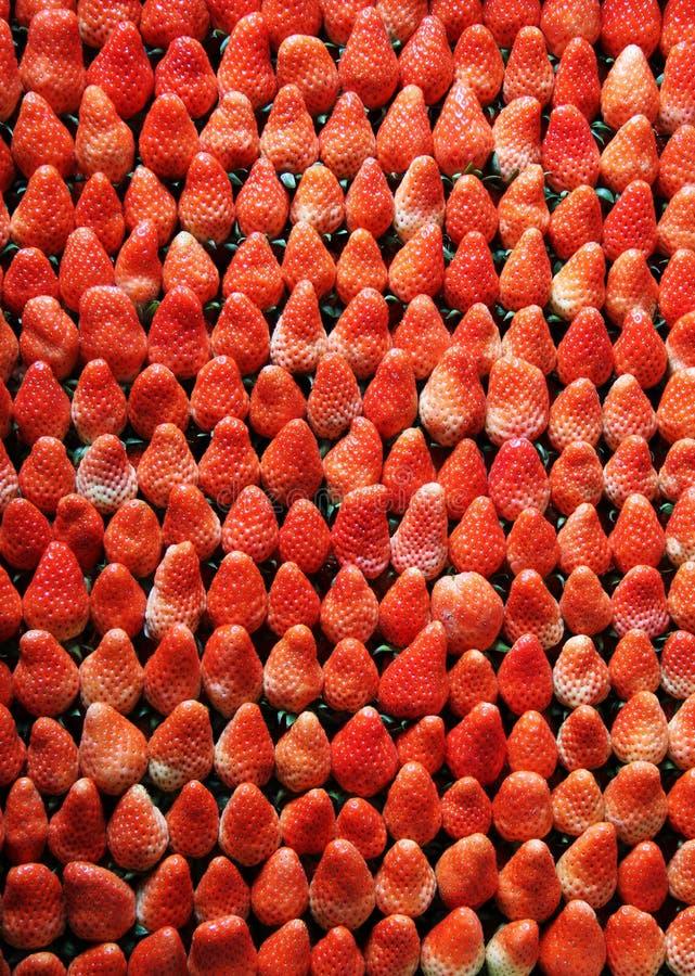 Arranged strawberries royalty free stock photo