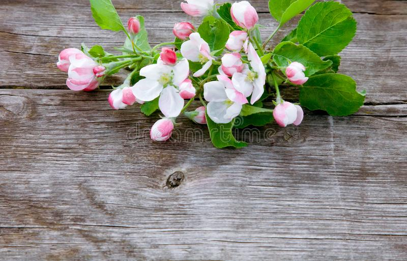 Arrangement of Apple inflorescence on wood background royalty free stock images