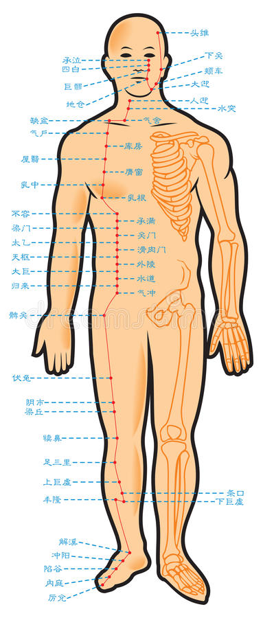 Arrangement chinois d'acuponcture illustration de vecteur