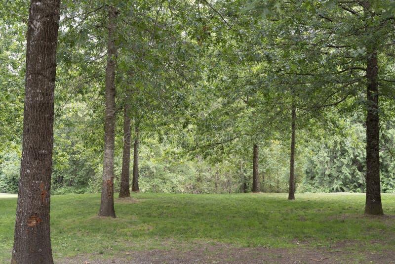 Arrangement de parc avec les arbres de verdure et l'herbe mais aucune personnes images stock
