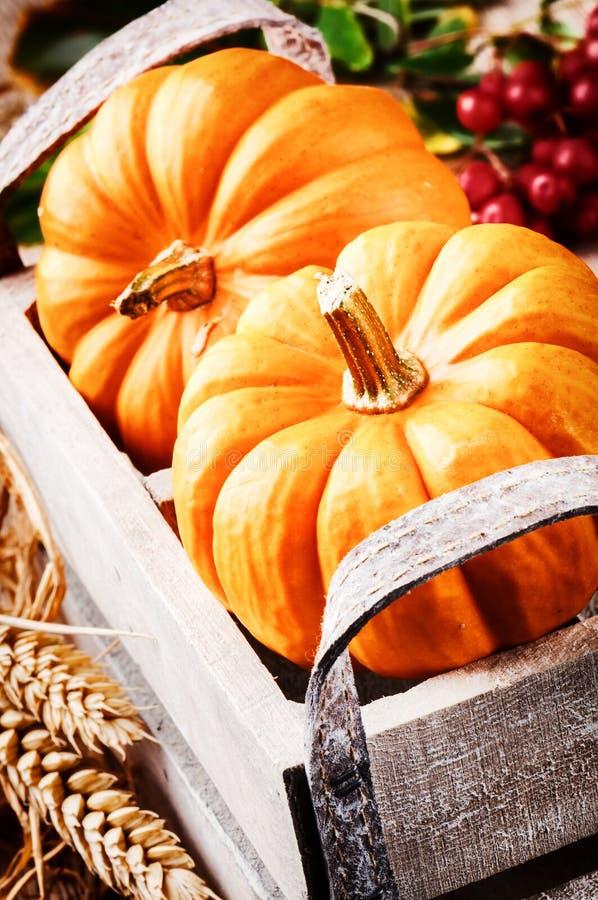 Arrangement de récolte d'automne avec des potirons images libres de droits
