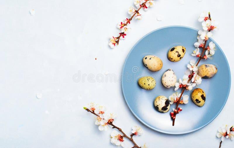 Arrangement de Tableau de P?ques avec des oeufs et des branches de caille dans la fleur, fond de vacances de ressort photographie stock