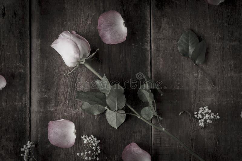 Arrangement of Desaturated Roses stock photos