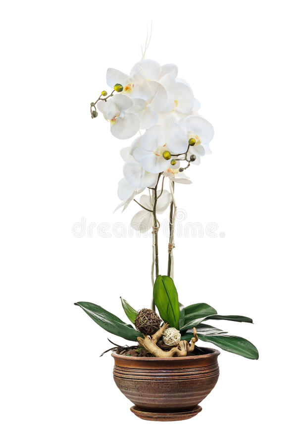 Arrangement floral des fleurs artificielles d 39 orchid e photo stock image du nature tropical - Orchideen arrangement ...