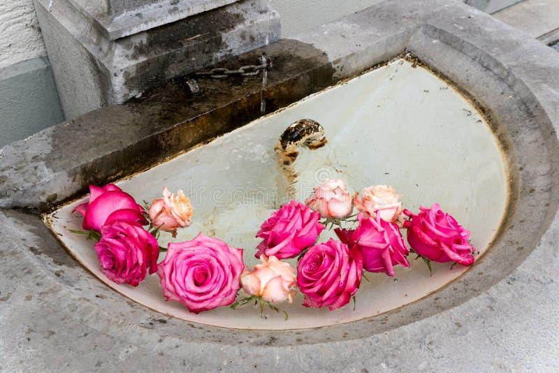 Arrangement floral des roses roses dans le bassin d'une vieille fontaine en pierre photos libres de droits