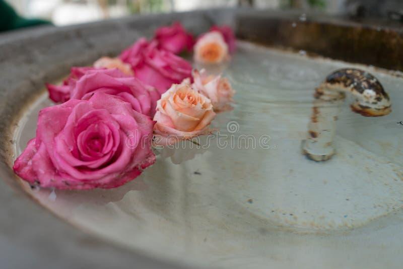 Arrangement floral des roses roses dans le bassin d'une vieille fontaine en pierre images stock