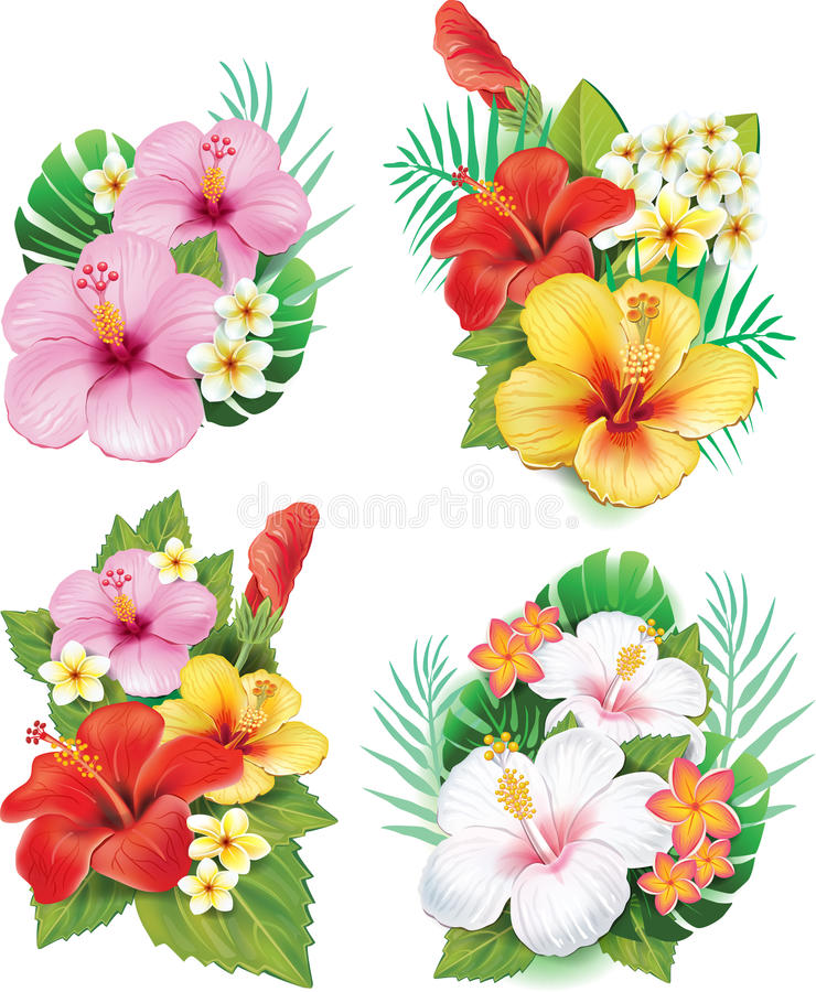 Arrangement from hibiscus flowers stock illustration