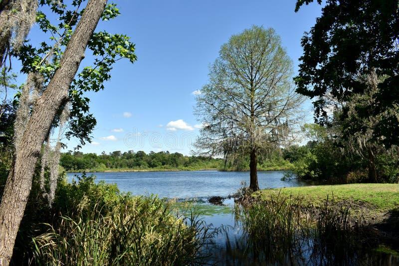 Arrangement idyllique de livre d'histoire d'arbre donnant sur un lac pr?s de l'universit? de la Floride ? Gainesville, la Floride photos stock