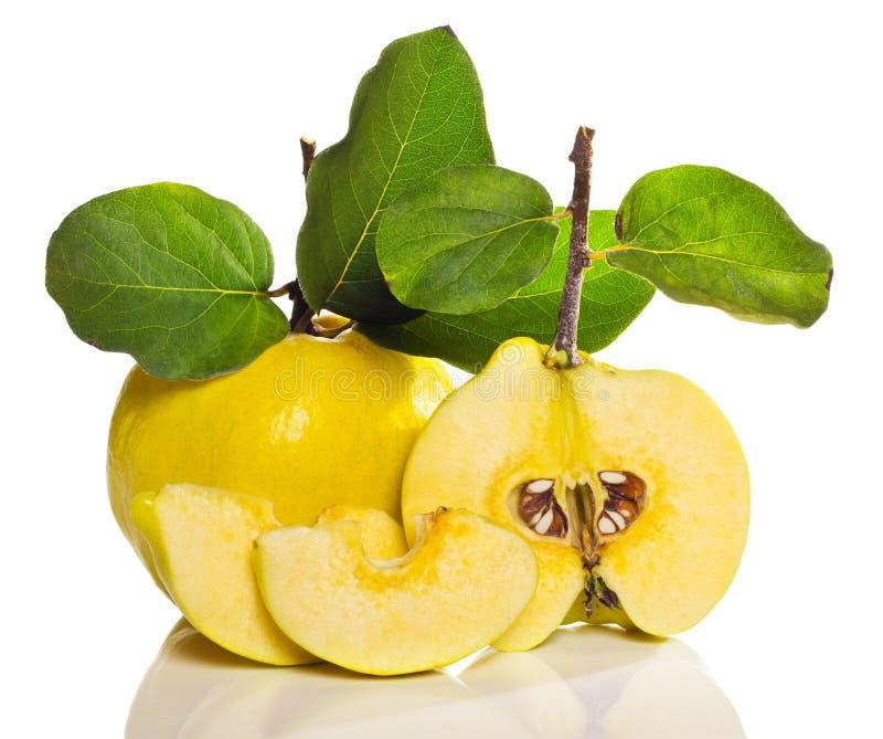 Download Arrangement of quince stock photo. Image of healthy, flavor - 19922676
