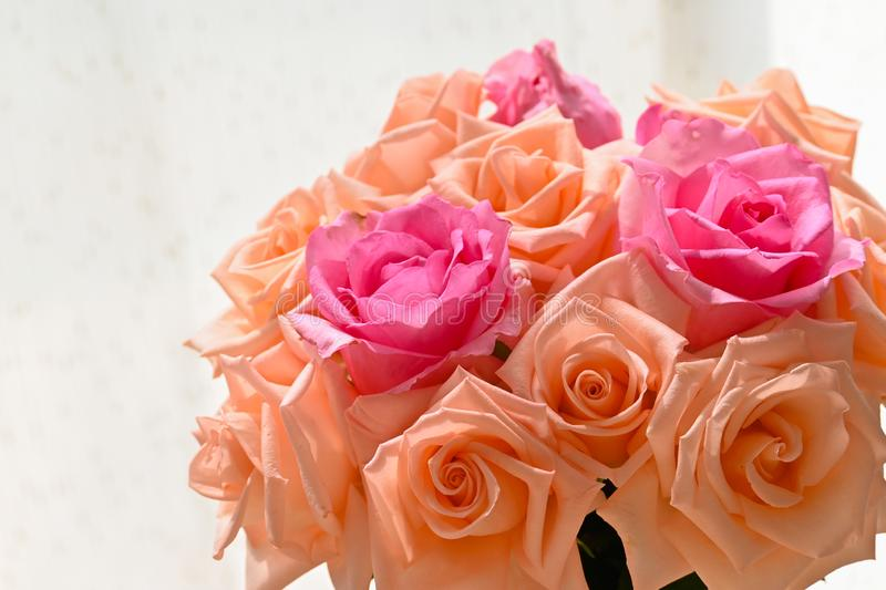 Arrangement romantic bouquet orange and pink rose blossom flower in vase with sunlight stock photo