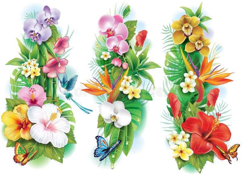 Arrangement from tropical flowers vector illustration