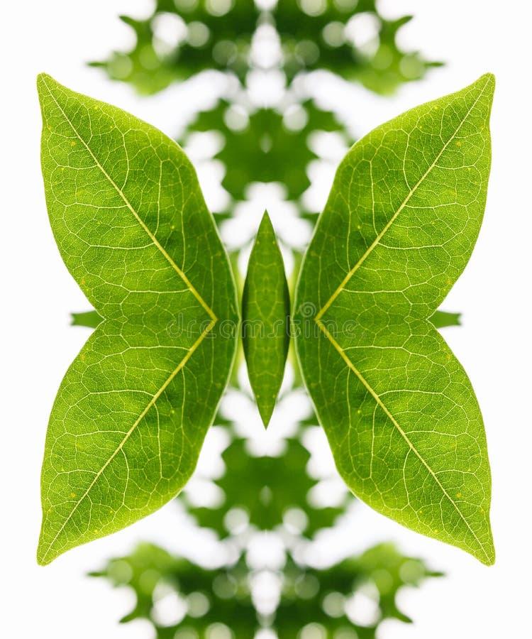 Arranjo artístico das folhas como uma borboleta imagens de stock