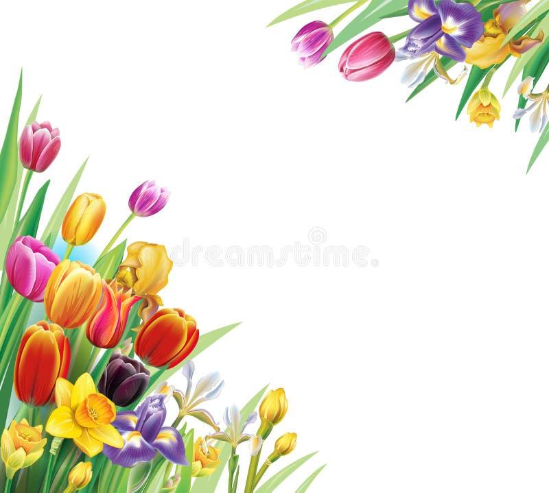 Arranjo com as flores multicoloridos das tulipas ilustração royalty free