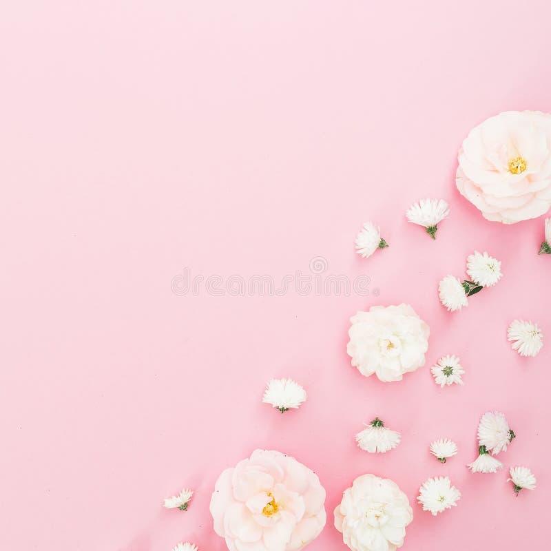Arranjo de flores das rosas brancas no fundo cor-de-rosa Configuração lisa, vista superior Fundo floral fotografia de stock royalty free